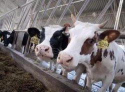 Аграрлық салада 9 инвестициялық жоба іске қосылады